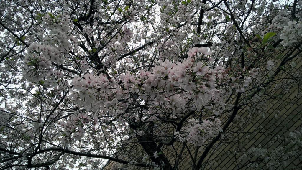 spring-16-2b
