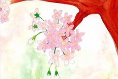 cherry-blossom-back